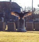 vultures in graveyard